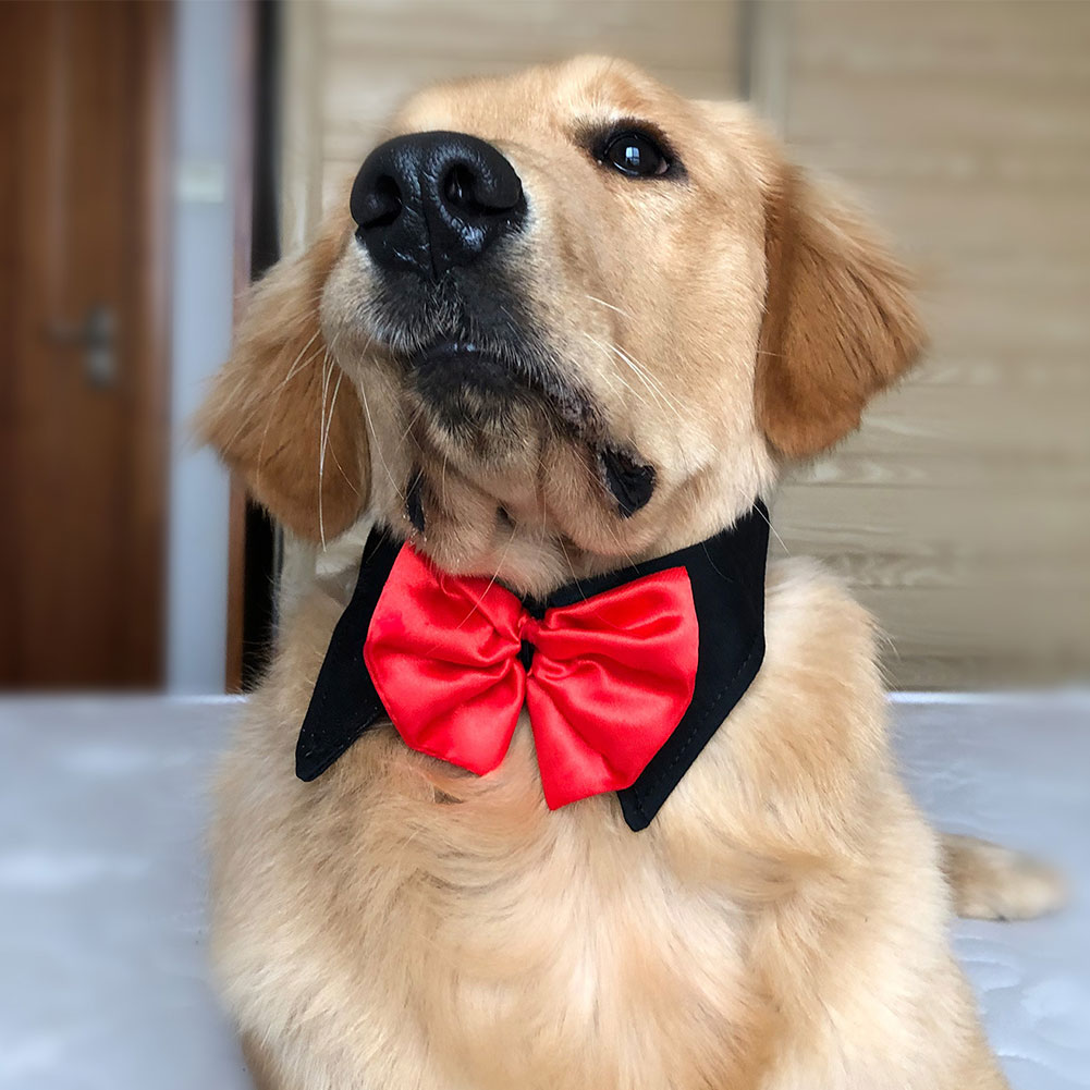 Adjustable Dog Bow Tie Puppy Pet Costume Collar Bow Tie Dogs Cats Puppy Tie Neck Tie  Wedding Tie Party Accessories