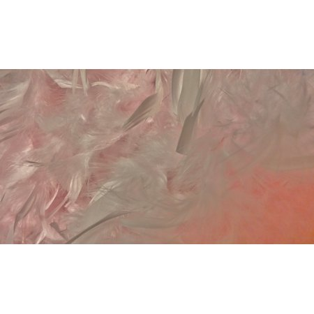 LAMINATED POSTER Feathers Pink Costume Boa Scarf Feather Boa Poster Print 24 x 36 (Halloween Costumes Arts And Crafts)