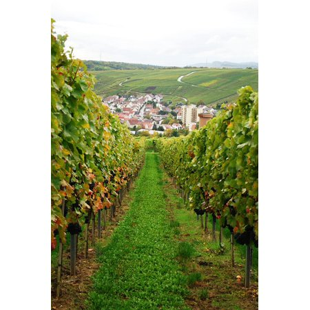 Canvas Print Vineyard Harvest Germany Grapes Grape Vine Wine Stretched Canvas 10 x (Vineyard Vines Canvas)