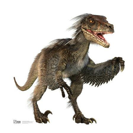 Velociraptor - Advanced Graphics Life Size Cardboard Standup](Cardboard Animals)