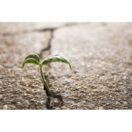 Weed Growing through Crack in Pavement Print Wall Art By Carlos