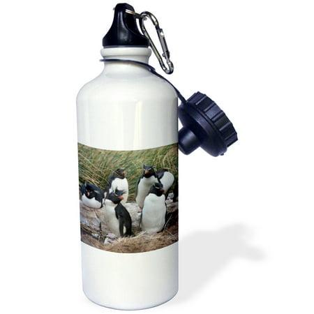 3dRose Rockhopper penguins, West Point Island, Falklands - SA09 HRO0046 - Hugh Rose, Sports Water Bottle, 21oz