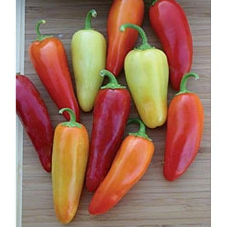 Pepper Hot Santa Fe Grande Great Heirloom Vegetable 100 Seeds Pepper 100 Seeds