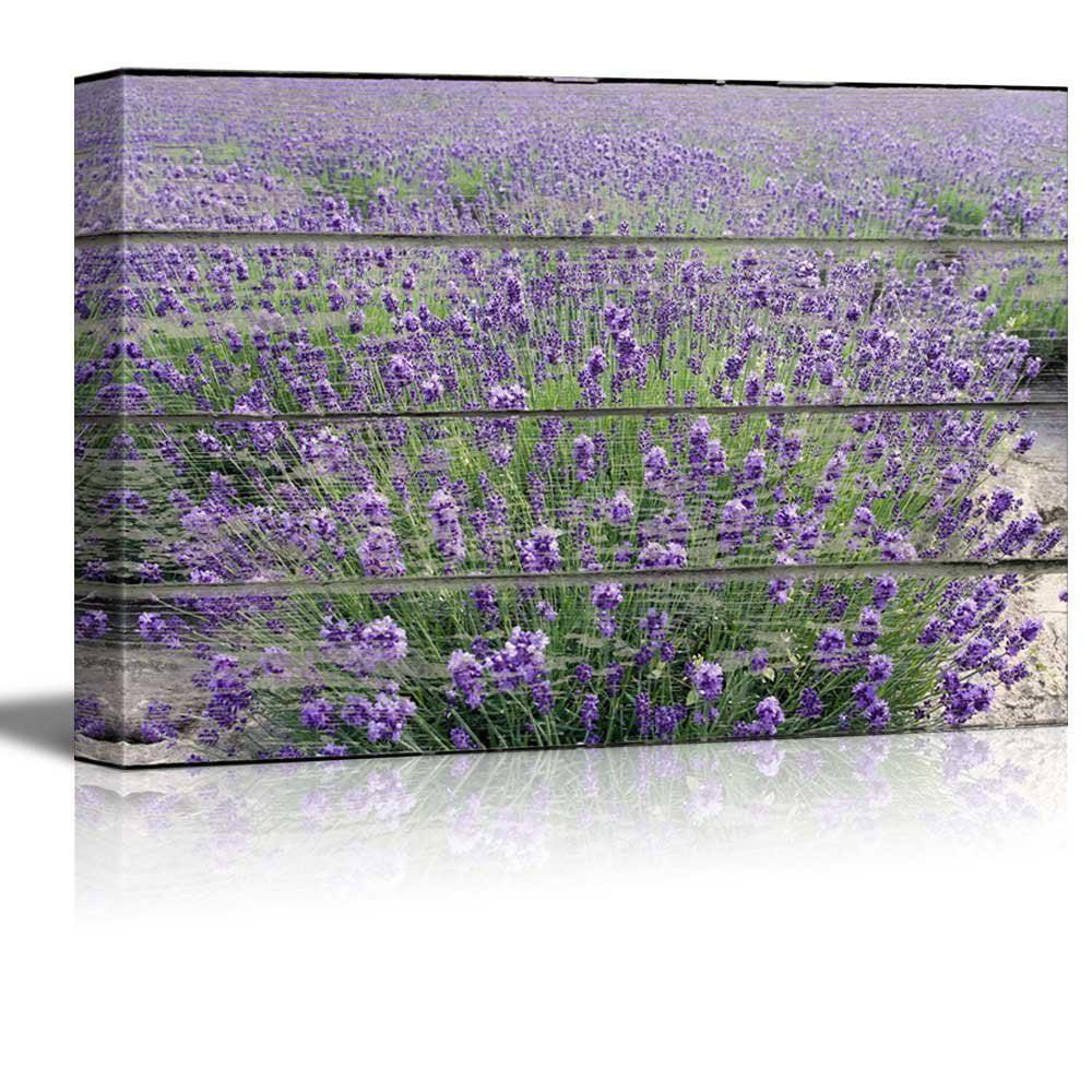 Purple Lavender Field On Vintage