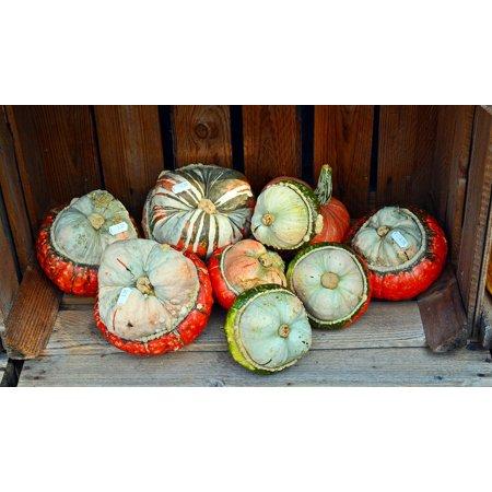LAMINATED POSTER Harvest Time Pumpkin Benefit From Sale Decoration Poster Print 24 x 36 for $<!---->