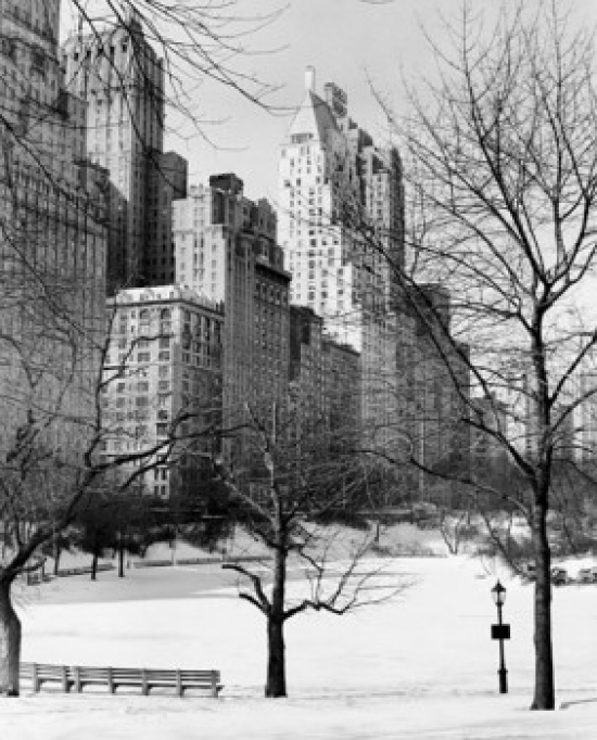 Central Park Manhattan: Bare Trees In A Snow Covered Park Central Park Manhattan