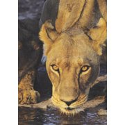 Vigilant Lioness Blank Book Lined Journal (5x7)
