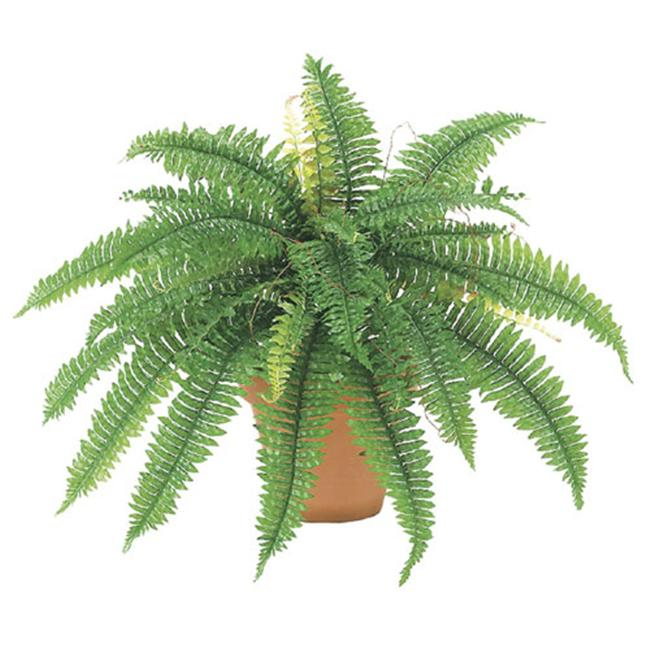 22 Inch Boston Fern Bush x32 - Qty of 6
