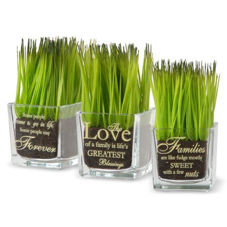 Winston Porter 3 Piece Family Quotes Printed Grass in Square Jar