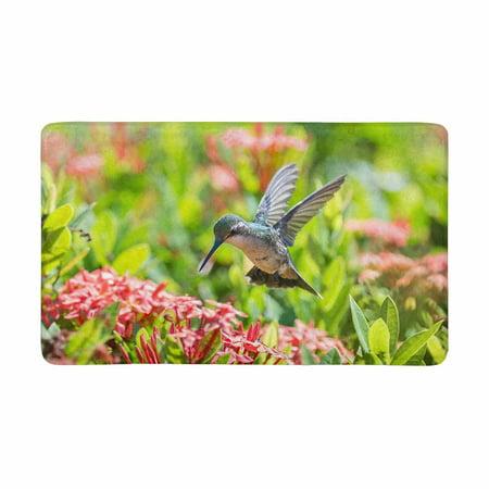 MKHERT Beautiful Hummingbird Feeding Red Flowers Doormat Rug Home Decor Floor Mat Bath Mat 30x18 (Hummingbird Red Flowers)