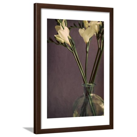 Flowers and Stems in a Bottle on Mauve Framed Print Wall Art By Tom Quartermaine