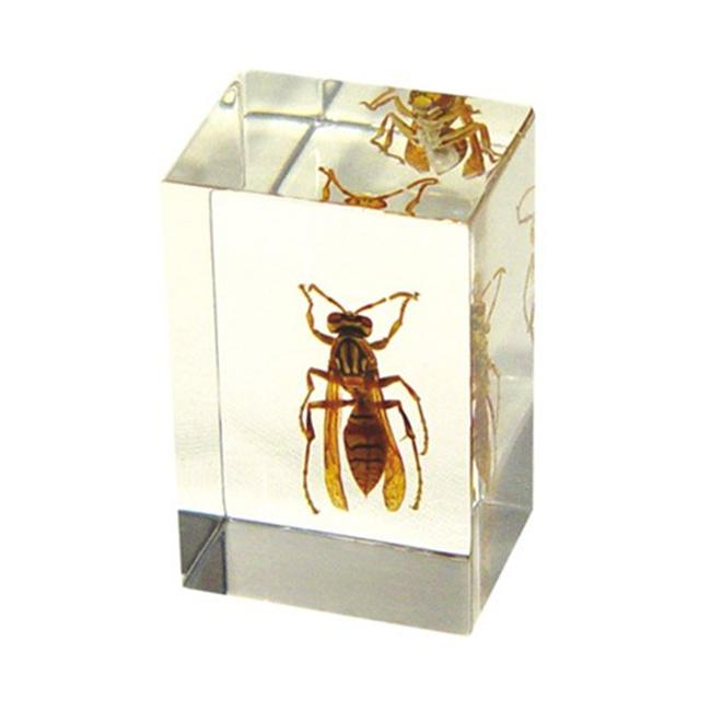 Ed Speldy East PW102 Real Bug Paperweight Regular-small-Polistes wasp
