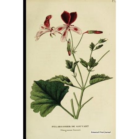 Botanical Print Journal : Pelargonium Gouvarti, 6 X 9 Vintage Botanical  Flower Print Journal - [lined Journal]