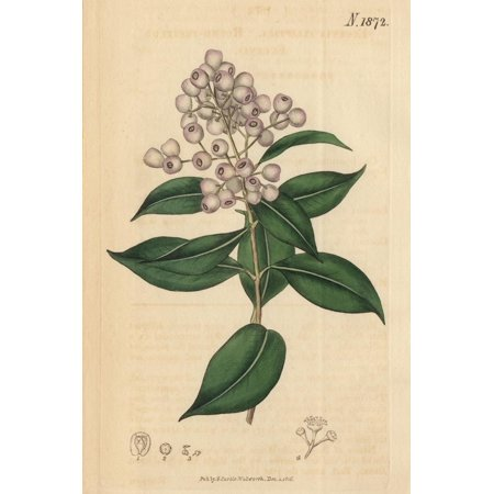 Berries and Leaves Vintage Botanical Print Print Wall Art By (Botanical Berry)