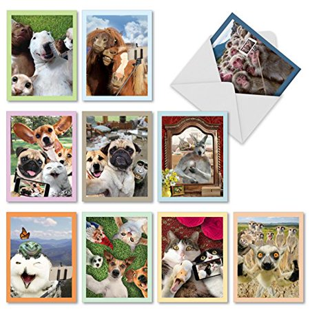 'M2373OCB ANIMAL SELFIES' 10 Assorted All Occasions Note Cards Featuring Wild and Wacky Animal Friends Taking Pictures of Themselves with Envelopes by The Best Card (Best Friend Card Ideas)