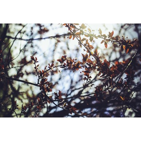 Cherry Tree Leaves - Canvas Print Leaf Prunus Cerasifera Leaves Cherry Plum Tree Stretched Canvas 10 x 14