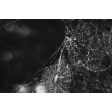 Framed Art For Your Wall Cobweb Creepy Spider Web Insect Black And White 10x13 - Black And White Spider