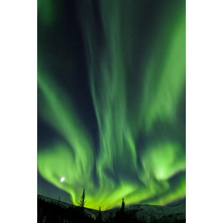 The bright neon green aurora and moon dancing like a flame over the boreal forest Chena River State Recreation Area Fairbanks Interior Alaska winter Canvas Art - Sunny Awazuhara- Reed Design Pics (24