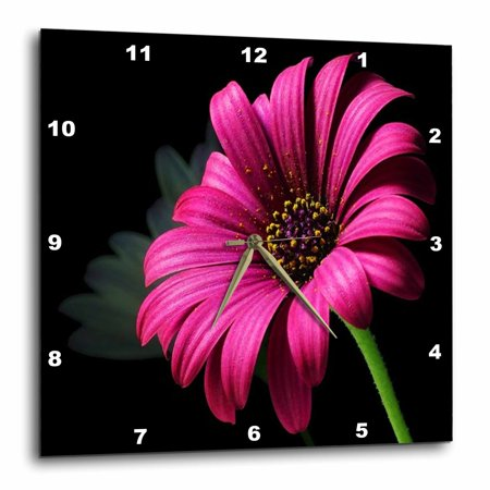 State Pink Wall Clock (3dRose Hot Pink Daisy On Black, Wall Clock, 10 by 10-inch)