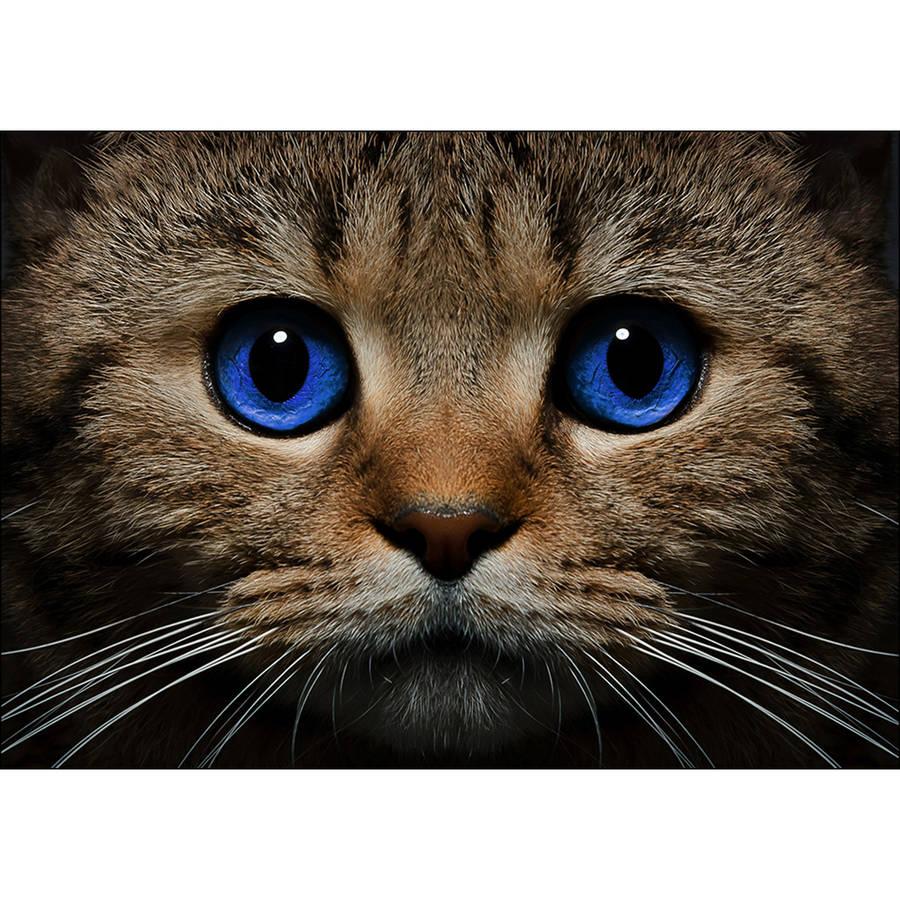 Collection D'Art Diamond Embroidery/Printed/Gem Kit, 27cm x 38cm, Blue-Eyed Cat