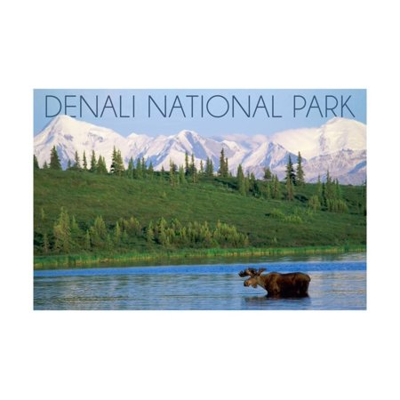Denali Moose (Denali National Park, Alaska - Moose and Water Print Wall Art By Lantern Press )