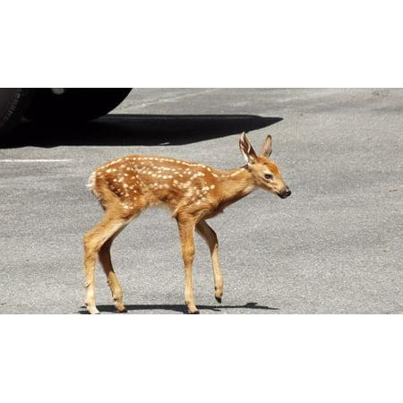 LAMINATED POSTER Doe Urban Wildlife Whitetail Deer Mammal Fawn Poster Print 24 x 36