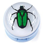Ed Speldy East ST2002 Blue Stapler with Real Green Chafer Beetle in Acrylic