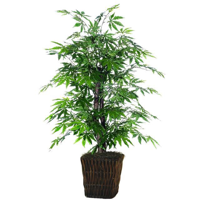 Japanese Maple Everyday Bush - 4 ft.