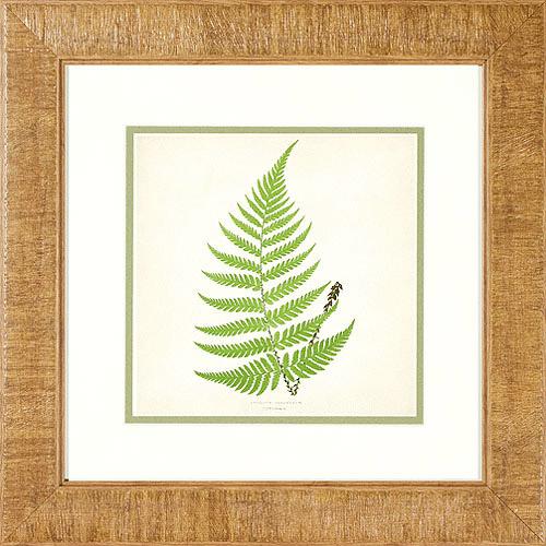 Better Homes and Gardens Ferns I Framed Artwork by Pro Tour Memorabilia