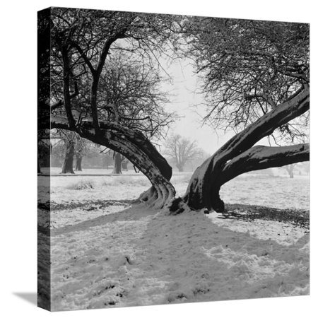 Gay Halloween Nights London (A Snow Scene in Richmond Park, Greater London Stretched Canvas Print Wall Art By John)