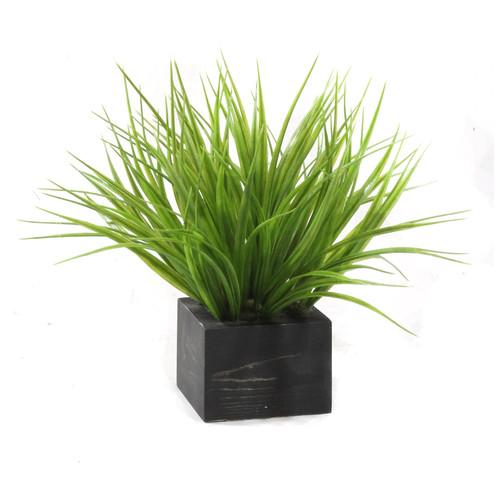 Dalmarko Designs Grasses in Wooden Planter