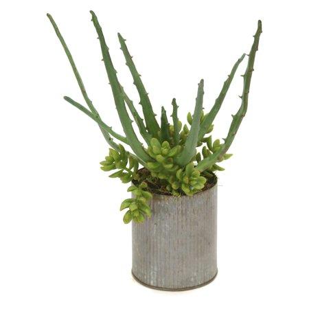 Distinctive Designs Aloe and Sedum Silk Plant in Cylinder