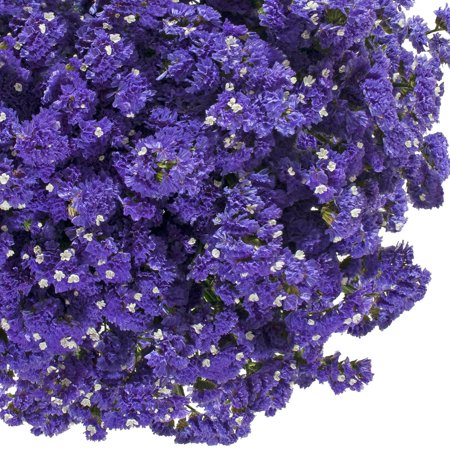 Natural fresh flowers purple statice 200 stems walmart natural fresh flowers purple statice 200 stems mightylinksfo