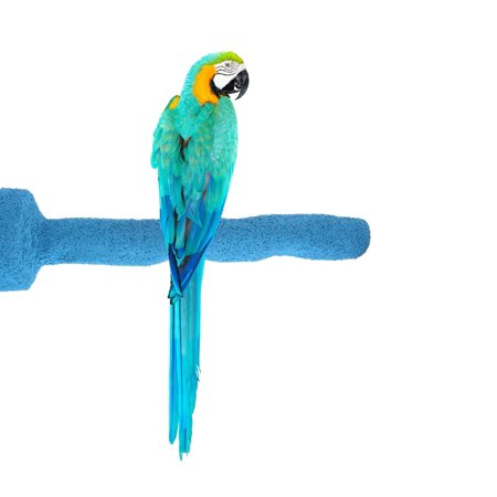 Sweet Feet and Beak Thermal-Lite Natural Patented Perch- Perfect for Keeping your Bird