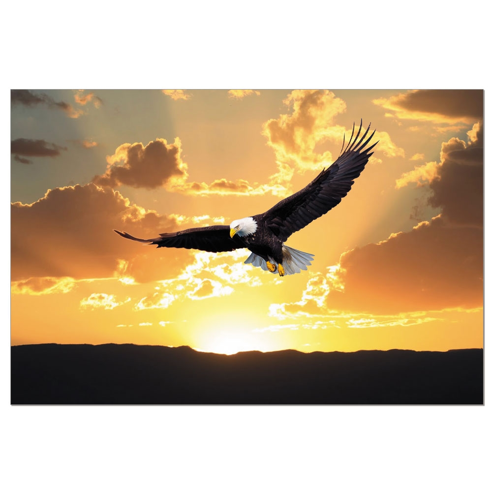 Tree-Free Greetings Eagle Soaring Boxed ECOnotes Blank Note Cards-FS56115