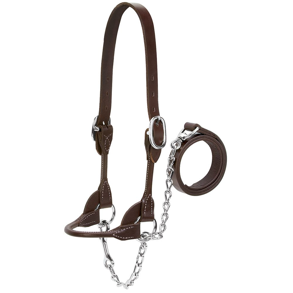 Weaver Leather  Dairy/Beef Rounded  Show Halter XLARGE Brown