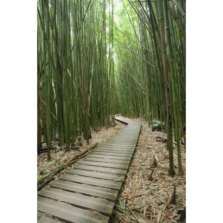 Hawaii Maui Kipahulu Haleakala National Park Trail through bamboo forest on the Pipiwai trail Stretched Canvas - Jenna Szerlag  Design Pics (12 x 19) ()