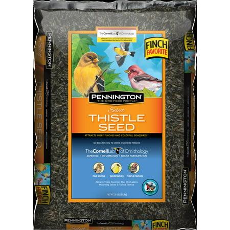 Pennington Thistle Seed Wild Bird Seed, 10 lb