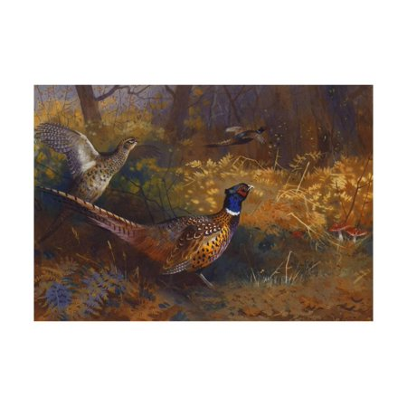 A Cock and Hen Pheasant at the Edge of a Wood Print Wall Art By Archibald Thorburn