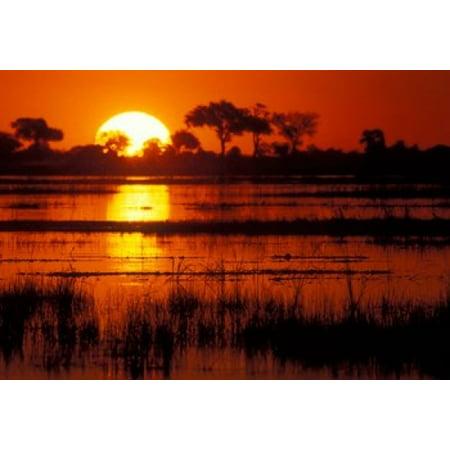 Setting Sun Over Lush Banks Chobe National Park Botswana Poster Print By Paul Souders