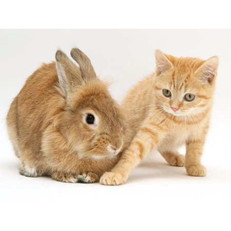 Ginger Kitten with Paw Extended and Sandy Lop Rabbit Print Wall Art By Jane Burton