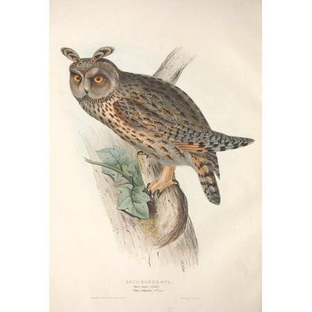 Image of Birds of Europe 1837 Long-eared Owl Canvas Art - J & E Gould (18 x 24)