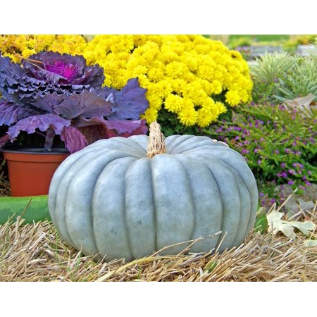 LAMINATED POSTER Gourd Fall Autumn Halloween Flowers Hay Poster Print 24 x 36
