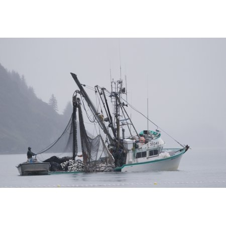 Commercial Seiner Malamute Kid Hauling In Catch Of Silver Salmon In Fog Port Valdez Pws Alaska Autumn (Best Ports In Alaska)