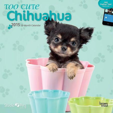 Myrna Too Cute Chihuahua 2015 Wall Calendar By 2015 Calendars