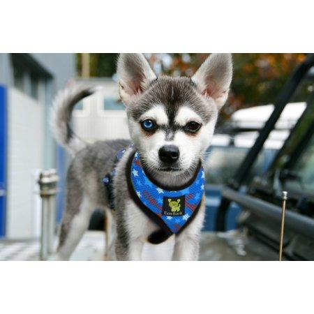 EcoBark Pet Supplies Max Comfort Eco-friendly Dog Harness - image 4 of 7