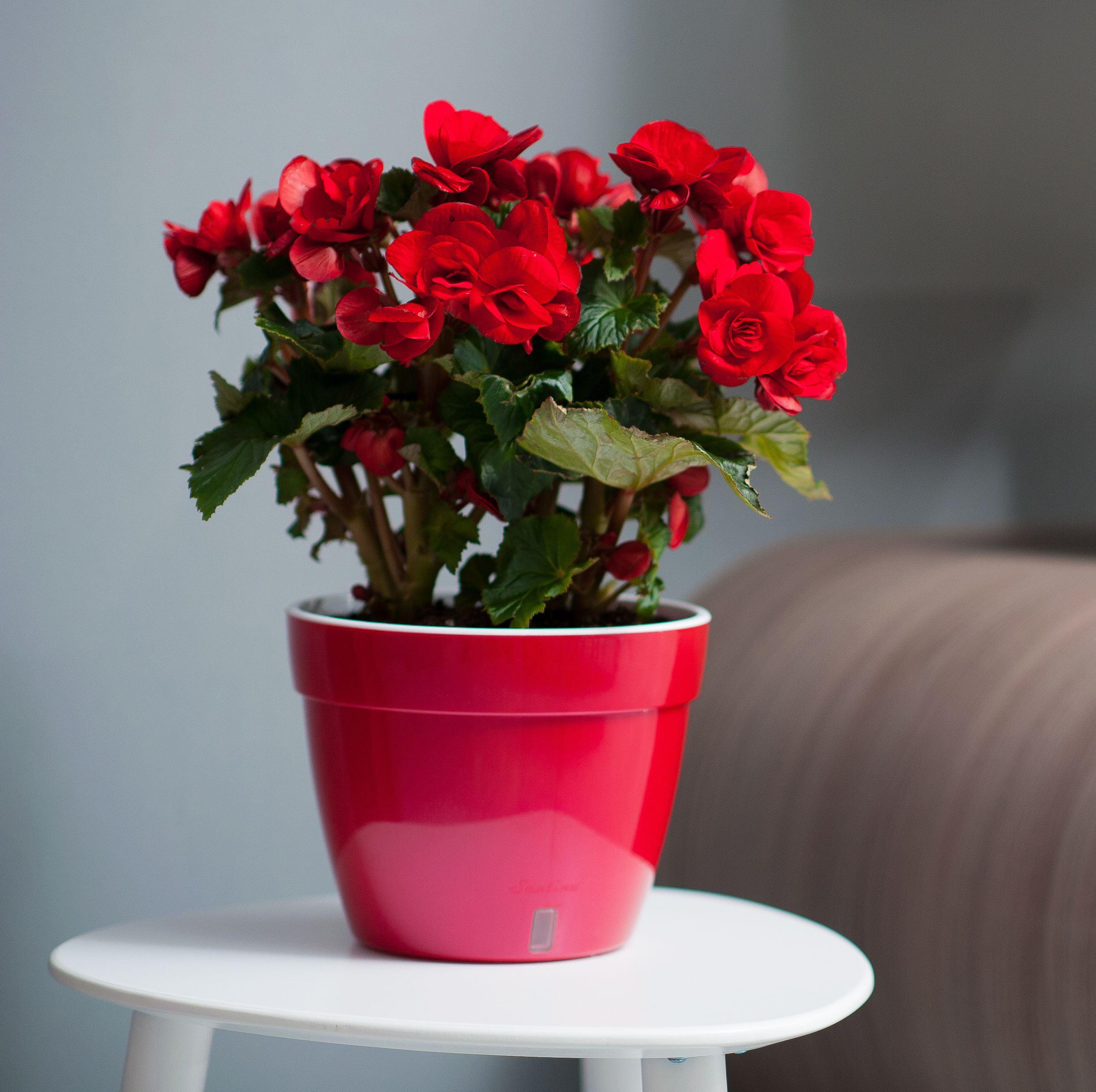 Цветы в горшках. уход. фото