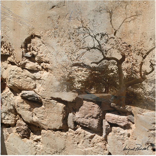 "Trademark Fine Art ""Rock & Tree"" Canvas Art by Miguel Paredes"