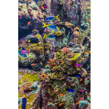 Aquarium Tropical Fish on A Coral Reef Print Wall Art By