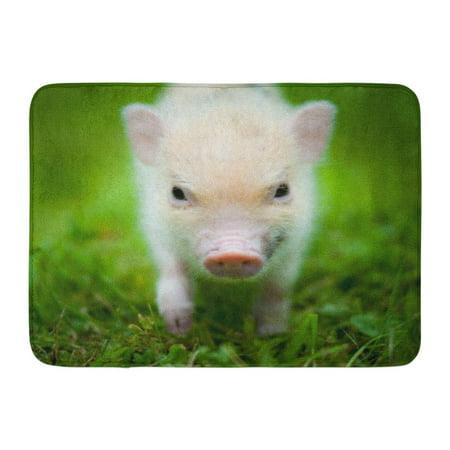 Mini Bath Mat (GODPOK Baby Green Minipig Cute Piglet of Mini Pig Portrait Sweet Boar Rug Doormat Bath Mat 23.6x15.7 inch)